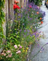 Dornoch Sidewalk Garden
