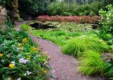 Garden Path, Ewe Gardens, Scotland
