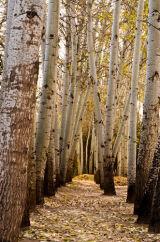 Golden Trees, Dunhuang, China