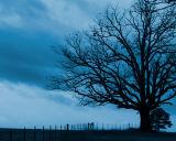 Madison Tree