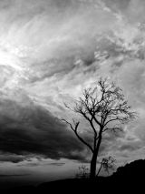 Who Art in Heaven, Black and White, Tasmania