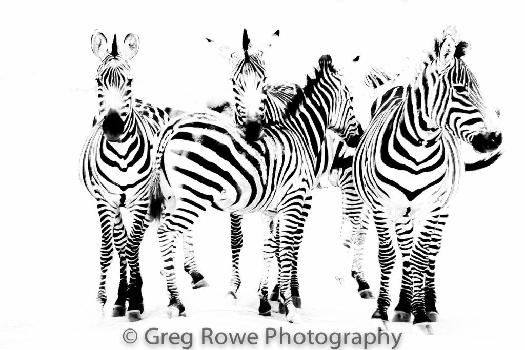 African Wildlife for print order