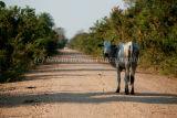 Rush hour on the Pantanal