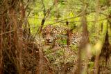 Wilson hiding