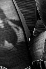 Kew Gardens, leaf 1